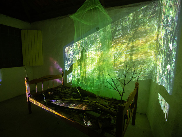 Amazonia Insomnia