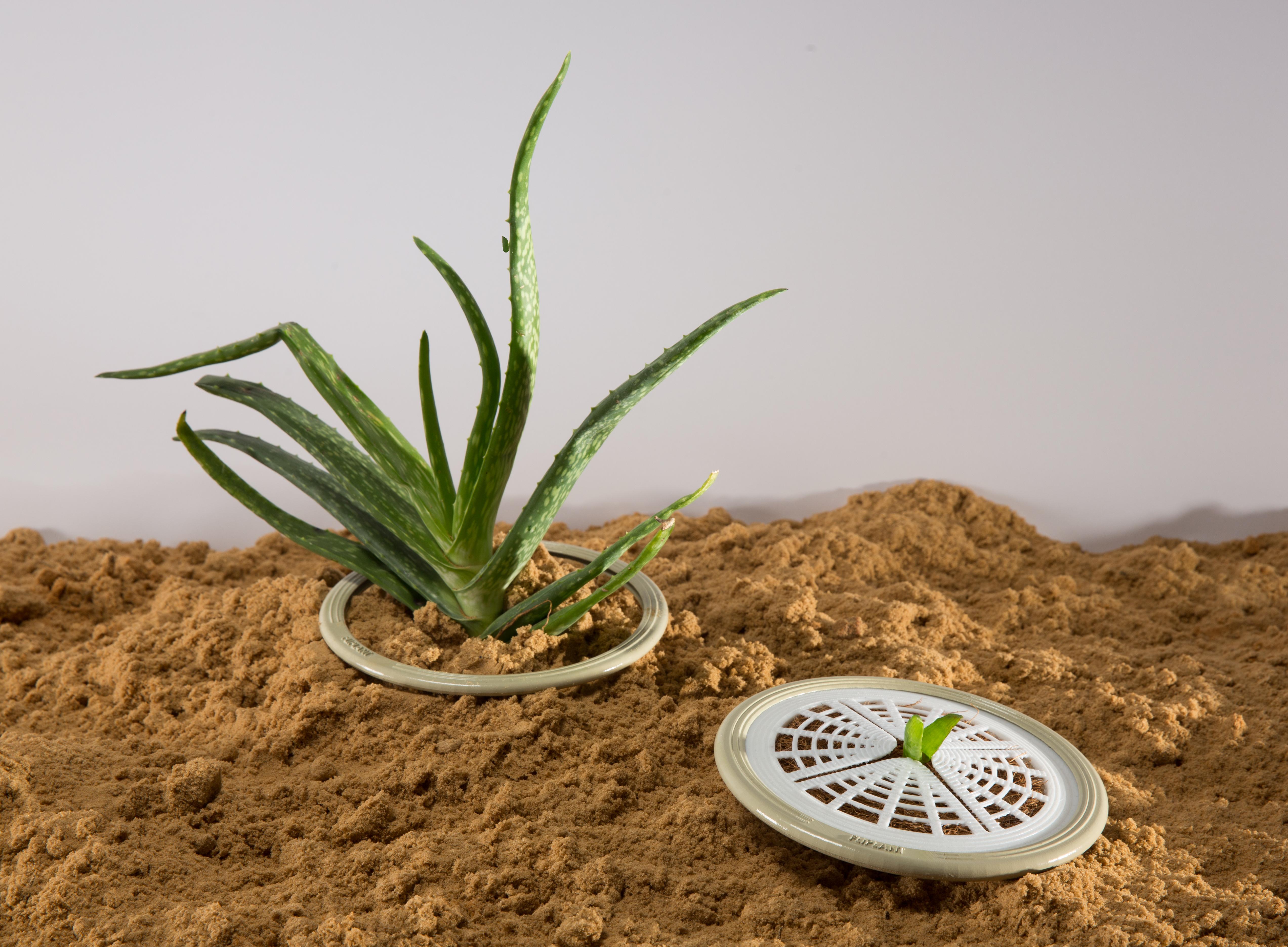 דנה דוייב צמח (10).jpg