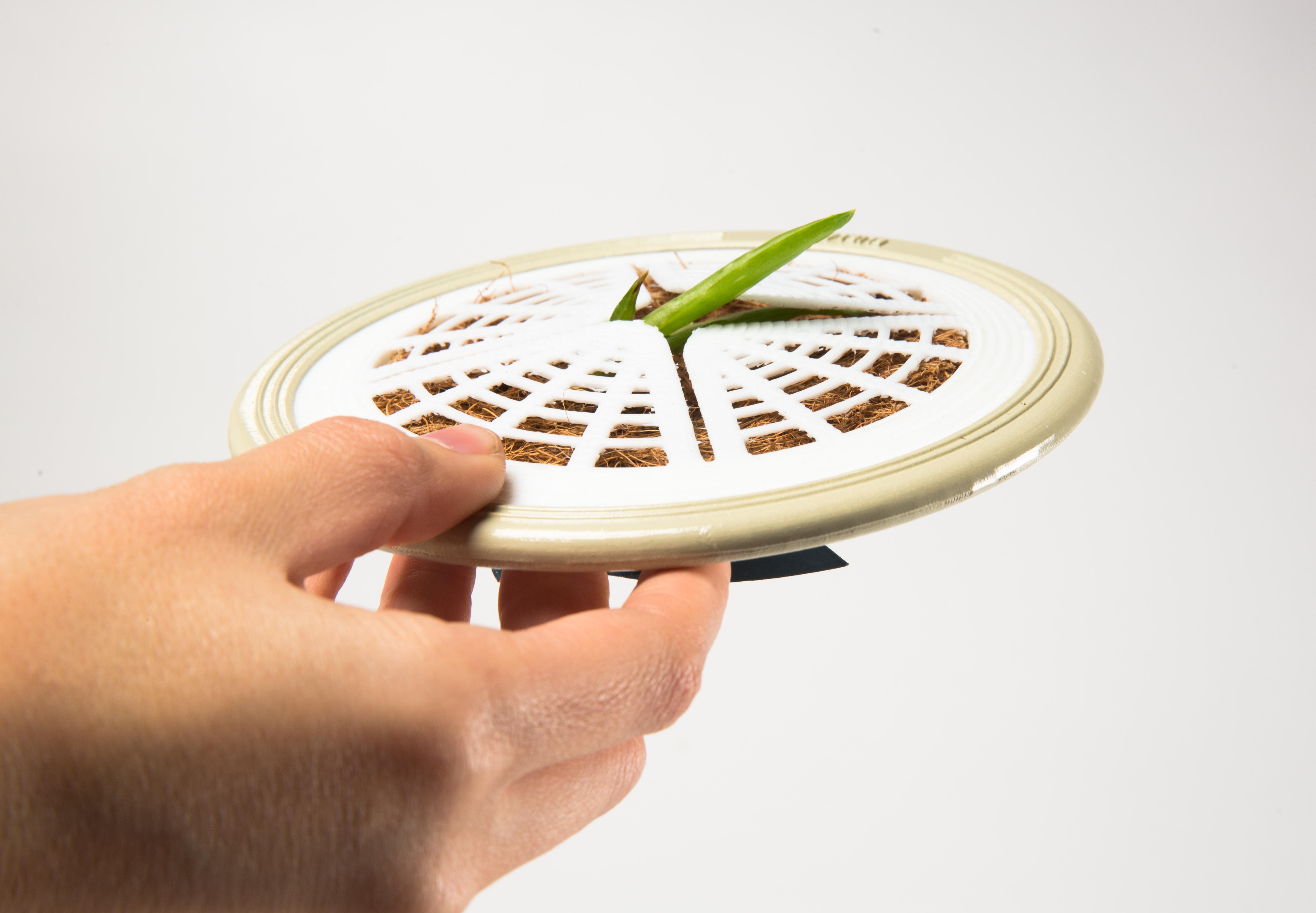 דנה דוייב צמח (3).jpg