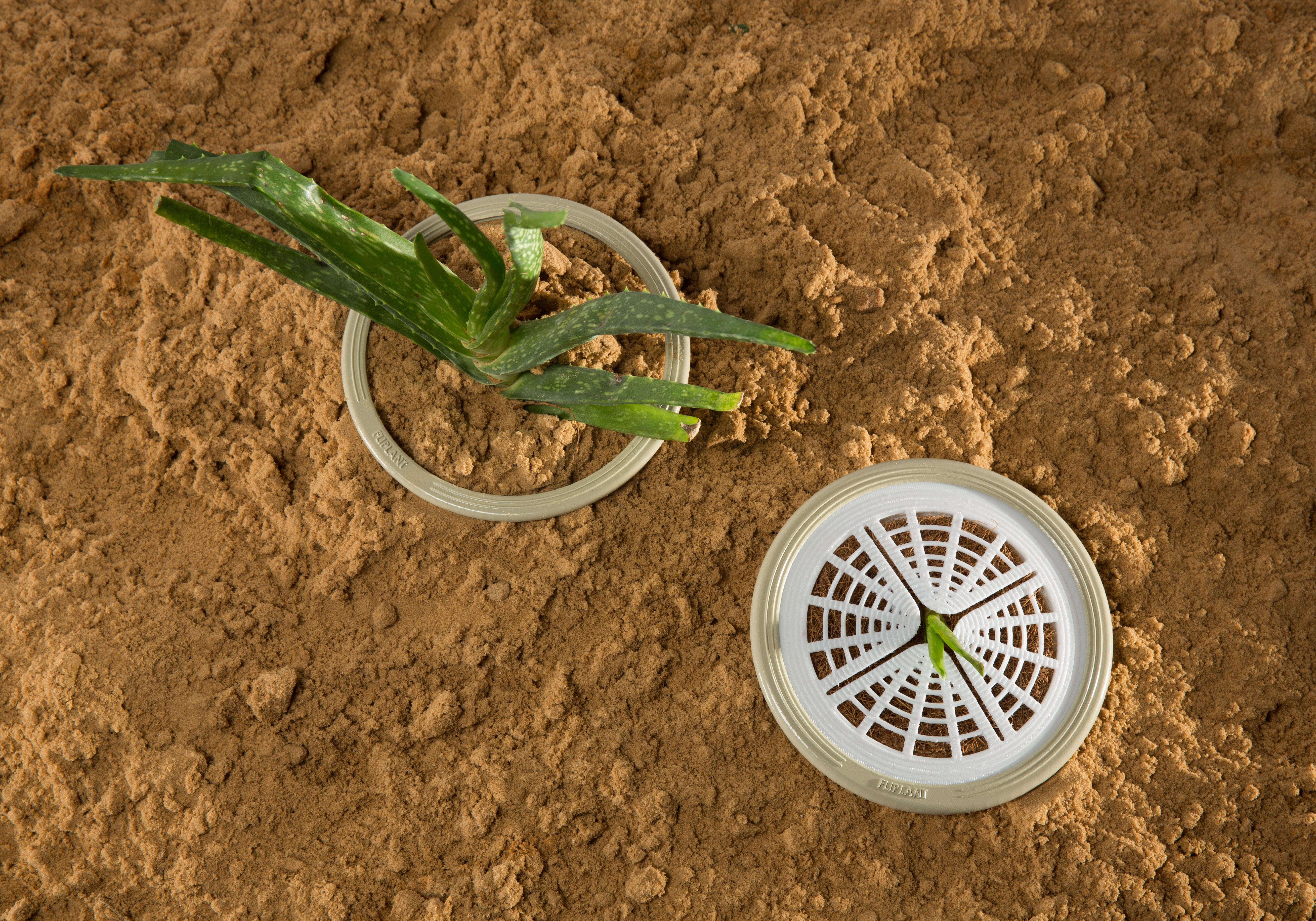 דנה דוייב צמח (11).jpg