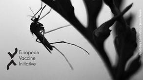 Malaria vaccine candidate PfAMA1 DiCo demonstrates broadening of immune responses