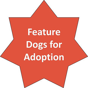 Feature Dogs for Adoption