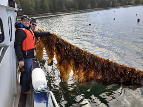 Cascadia Seaweed Joins the Global B Corp Movement