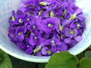 April Herbal Remedy: Violet