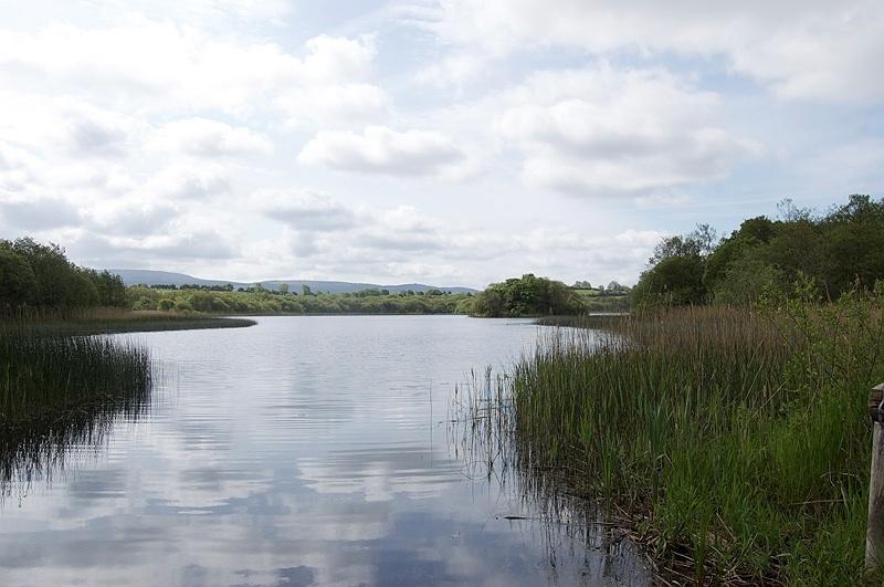 Roselières Lac Irlande