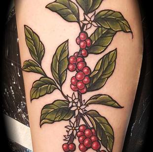 coffeeplant.jpg