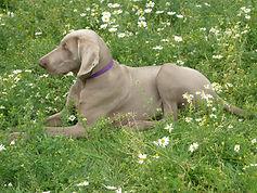 Oscar amongst daisies
