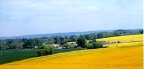 Oilseed rape001.jpg