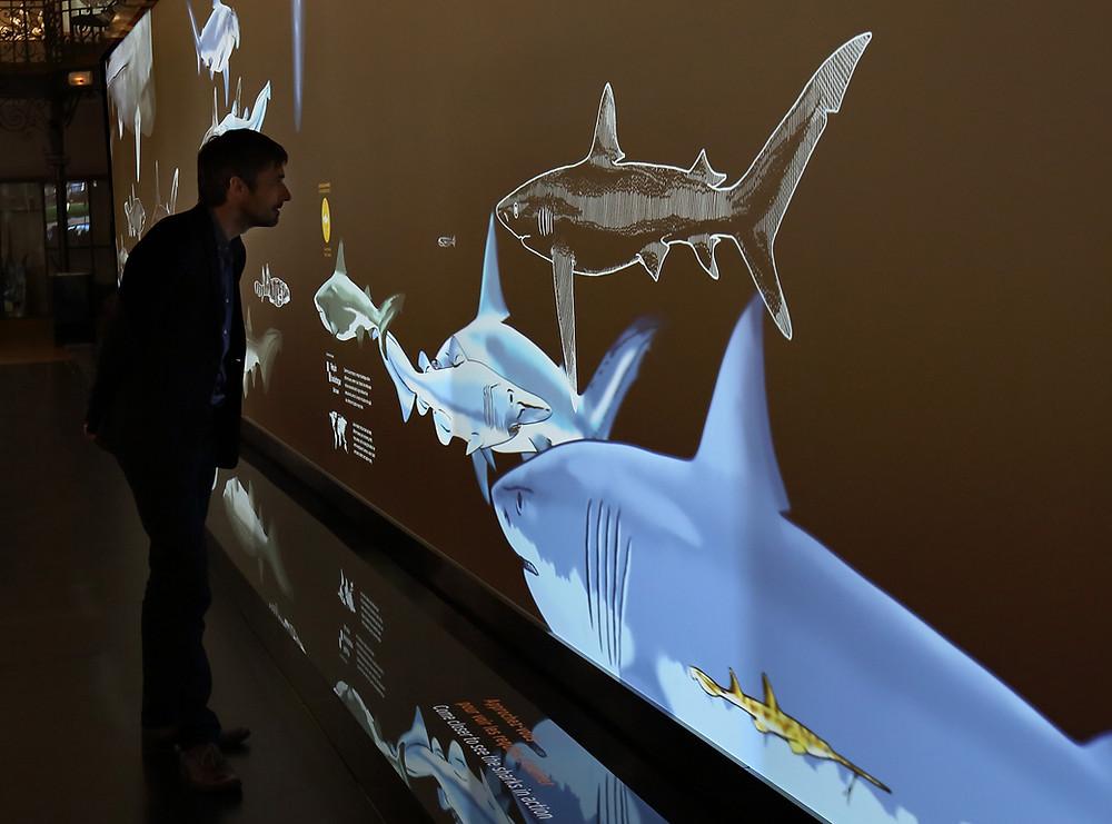 Musée océanographique Monaco exposition requins