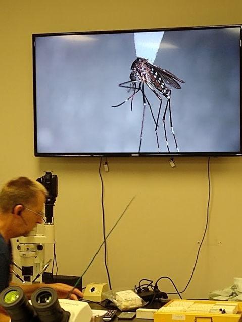 MosquitoInstruction.jpg