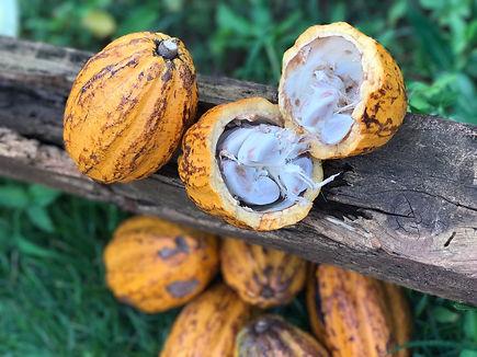 Cacao en madera.jpg