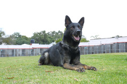 Entrenamiento Dogs and Pets