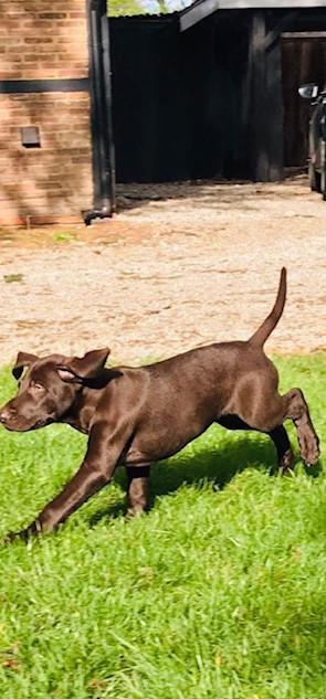 pups cancy2.jpg