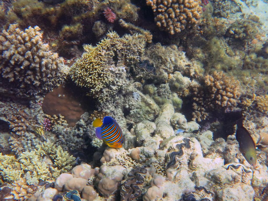 IMG_4012_Королевская рыба-ангел.JPG