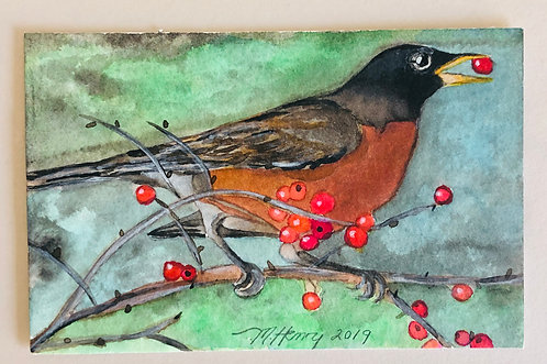 Mr. Robin with Berries