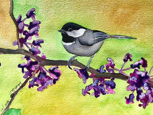"""""""Black Capped Chickadee In A Red Bud Tree"""" An Original Watercolor"""