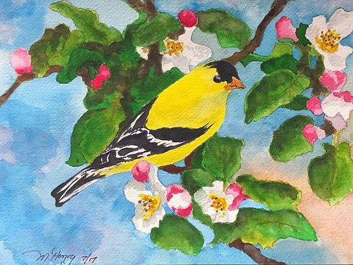 """Yellow Finch Perched Red Bud Tree"" An Original Watercolor"