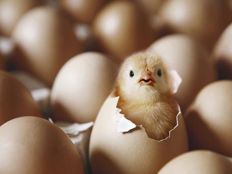 """「ゆで卵からヒヨコが生まれた!」─中国でトンデモすぎる""""学術論文""""に批判の嵐【クーリエ・ジャポンからの抜粋-Vol.32】"""