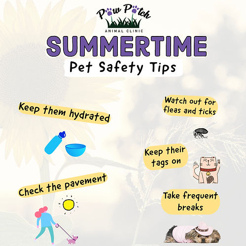 Summertime Pet Safety