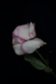IMG_0432 copy.jpg