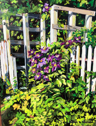 Clematis on Old White Fence