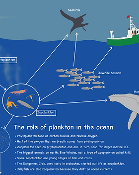 The Role of Plankton Horizontal PosterV3