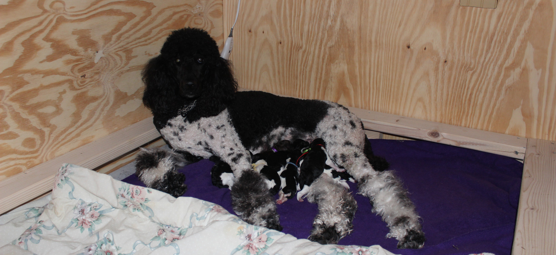 Tilly enjoyed motherhood.
