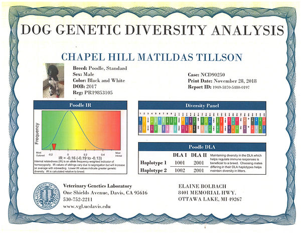 Tillson DNA Panel_edited_edited.jpg