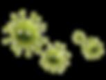 adobestock bacteria transparent.png