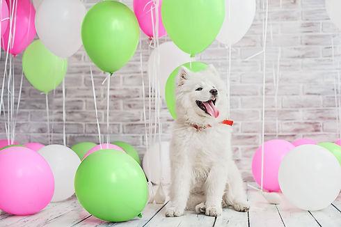 ballong-hund.jpg