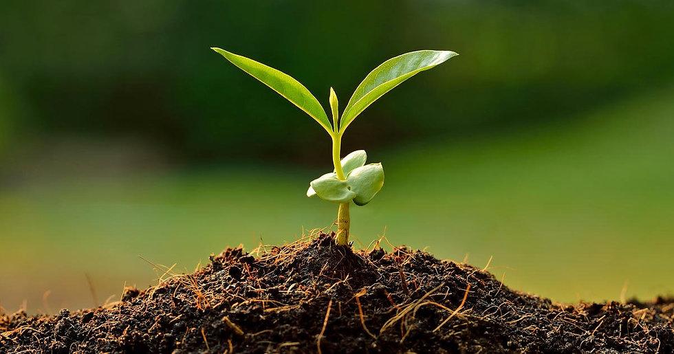 pflanze-keimling1.jpg