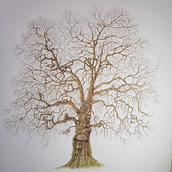 Botanical painting 1.jpg