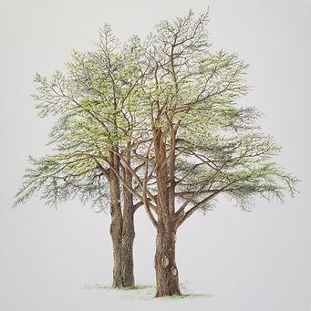 Botanical painting 3.jpg