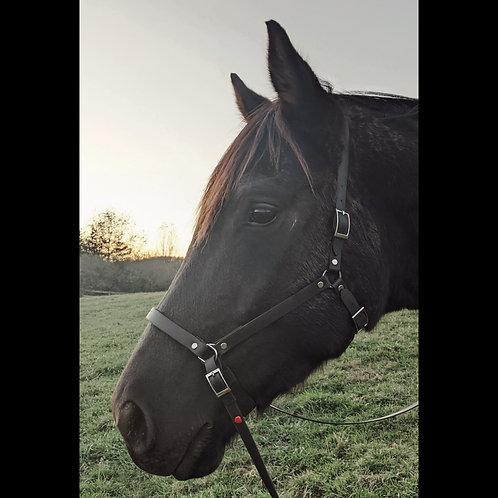 Heart Horsemanship Bitless Bridle
