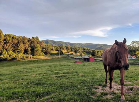 Outdoor Horses