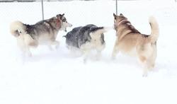 Pups in Snow