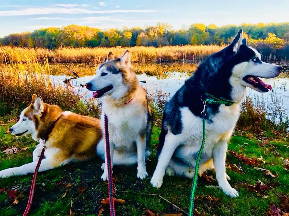 Backyard Lake Pups