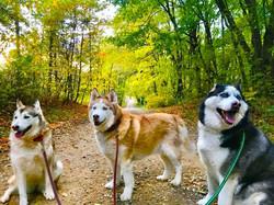 Fall Dirt Road Pups