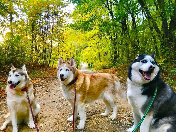Fall Dirt Road Pups.jpg