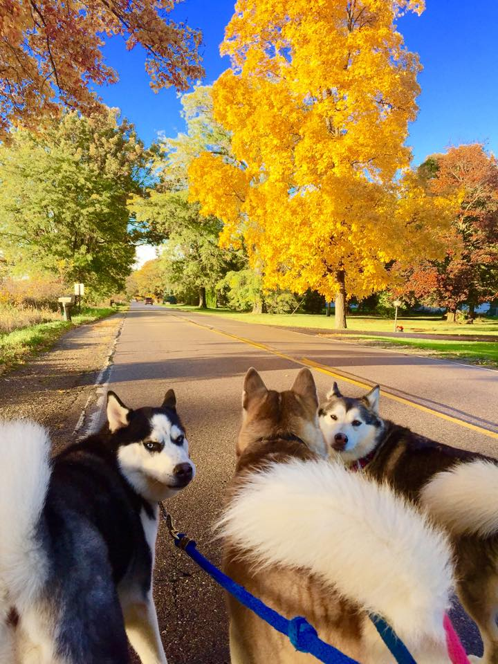 Pups road walking fall