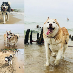 Beach Pups Colleage