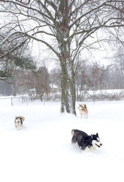 Pups running in Snow