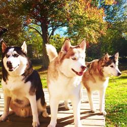 Pups Backyard Porch Fall