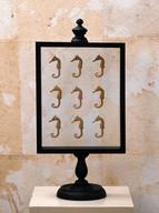 Misure  l 20 x h 41     Vetrina cavallucci marini    Legno e vetro