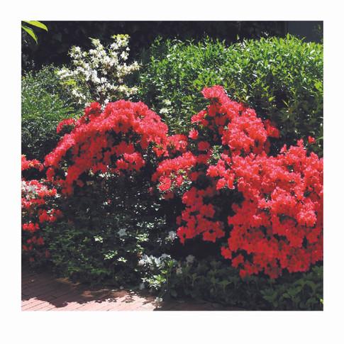 The Secret Garden and its treasures6.jpg