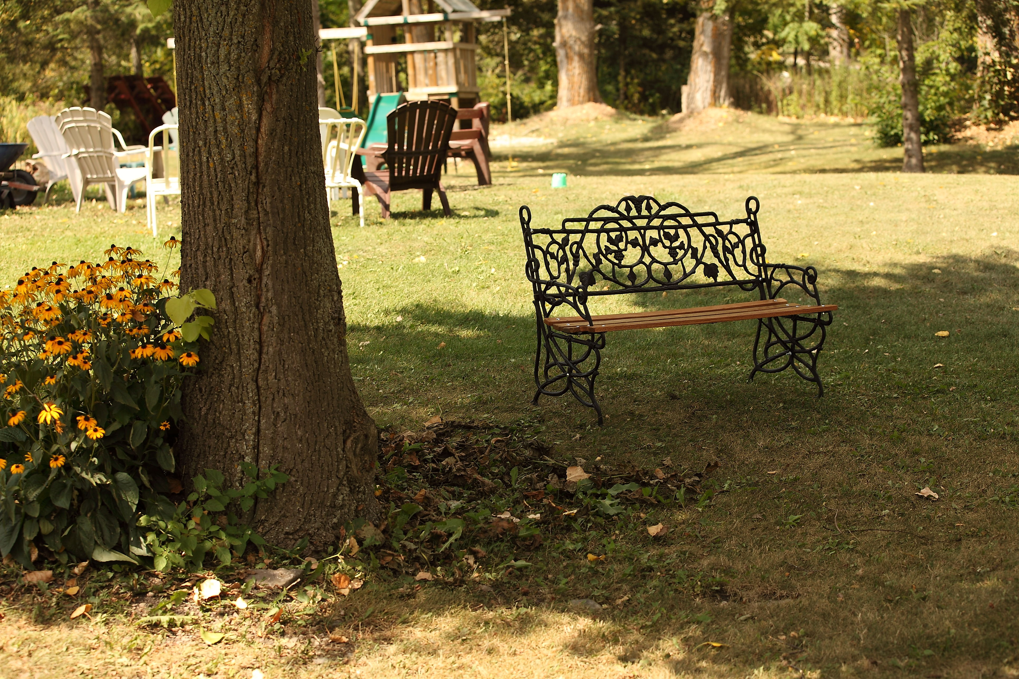 Bench in the Shade