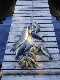 Fish on stringer