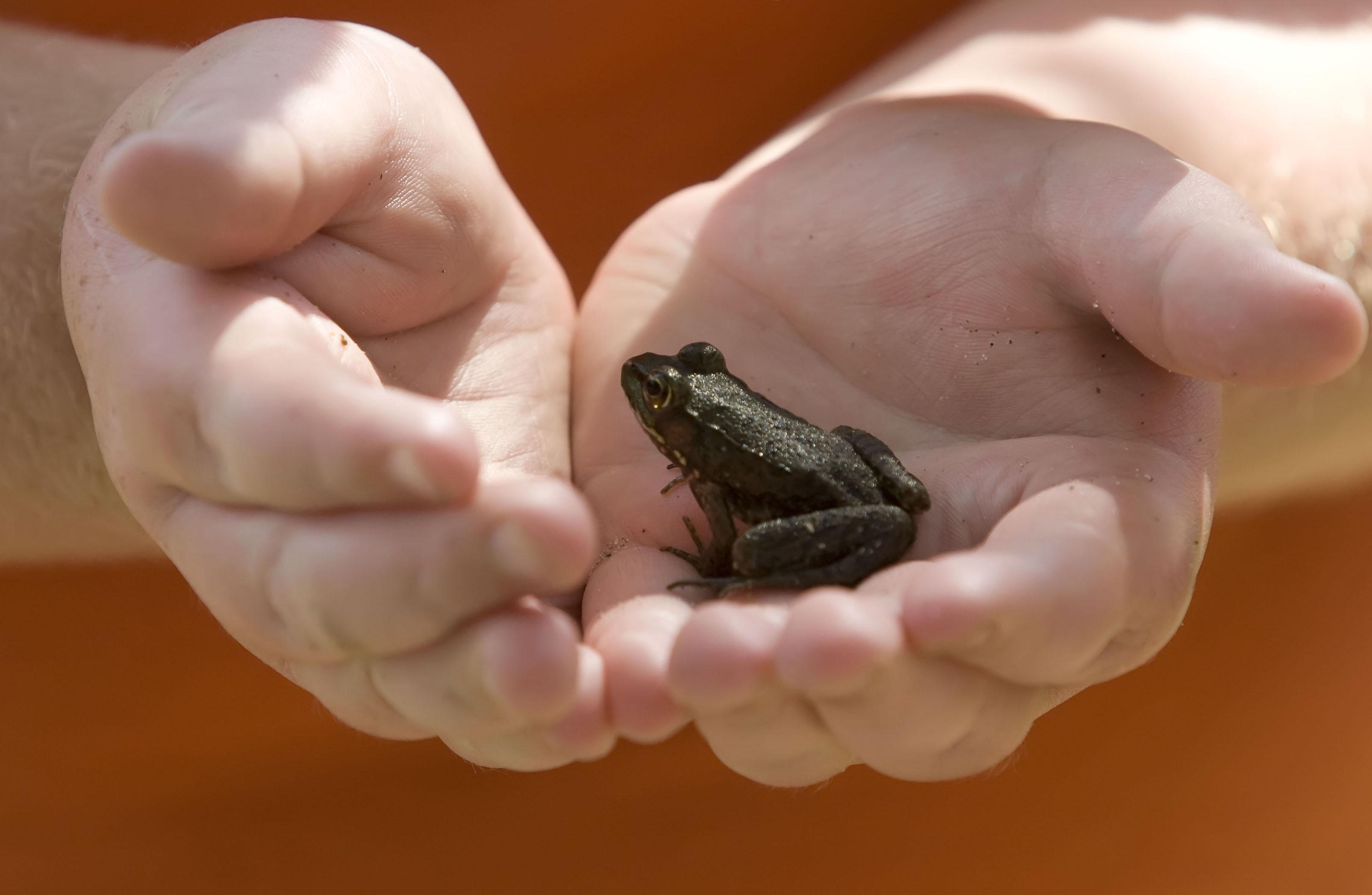 Froggie Friend