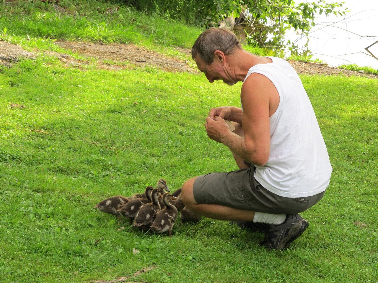 Feeding the Ducklings