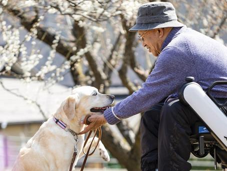 【用家分享】「只要左手能動便可以了」 重新成為犬隻訓練員